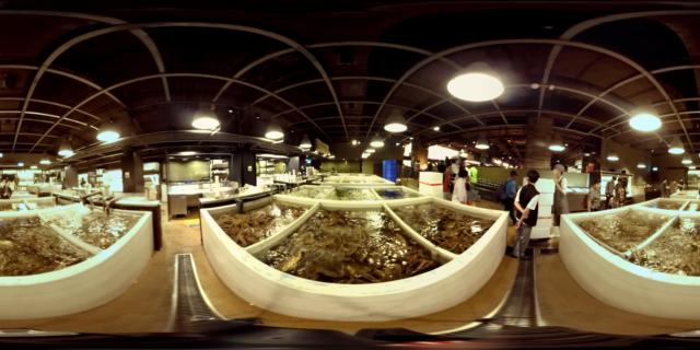 MOMENT   Fish Market